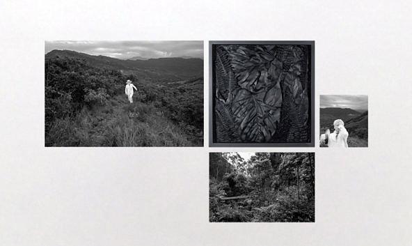 Exposição —Sobre natureza