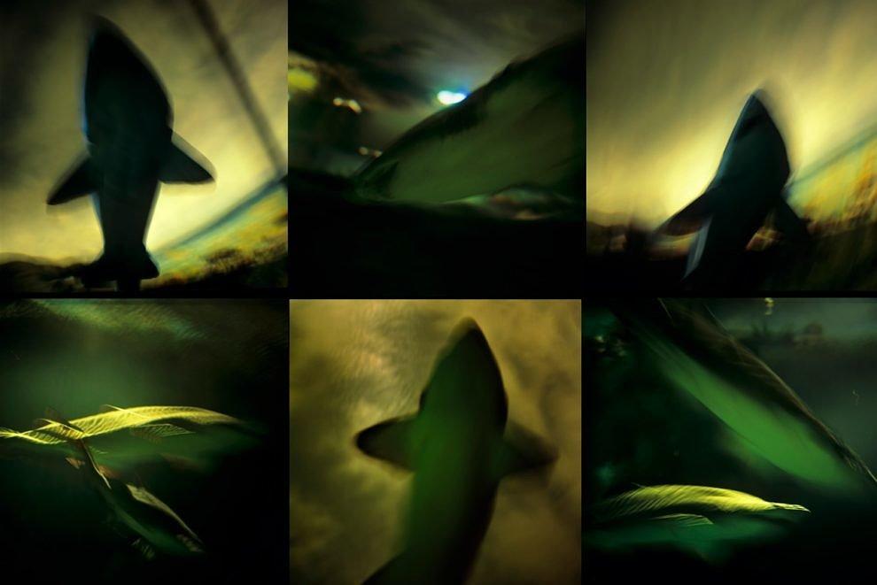 Tubarões, 2015