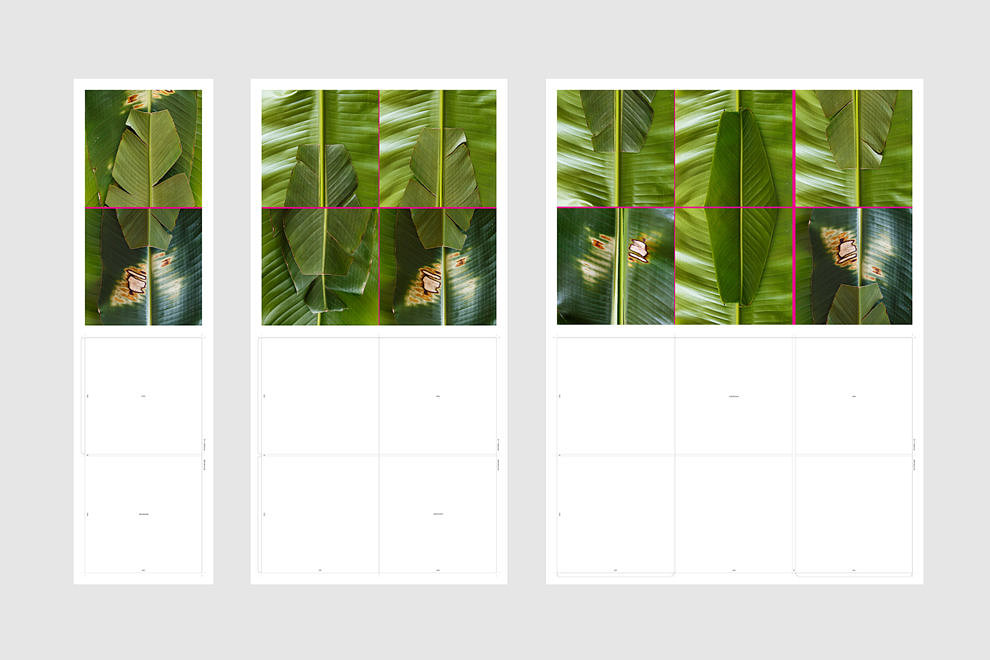 Heliconia Rostrata from the series Covers, 2018